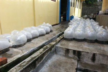 Packing Ikan Nila