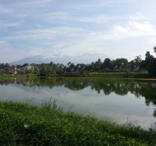 produk unggulan Sentra Benih kan air Tawar - Bungapadma Fish Farming adalah Benih Ikan Nila